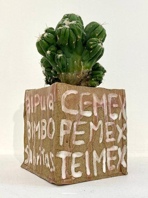 Untitled Cactus, 2021