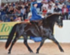 This #dartmoor pony is amazing.jpg