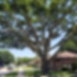 Tree-Triming-Shaping-5-20.jpg