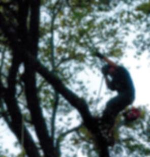 McKenzie-Tree-Service-Shaping.jpg