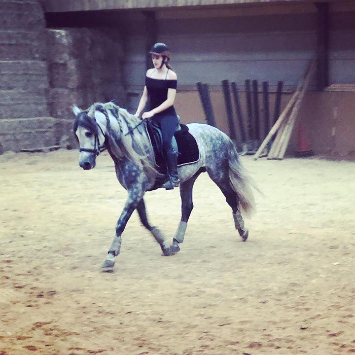 Visite des chevaux à vendre