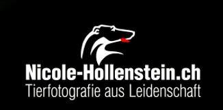 Logo Hollenstein.PNG