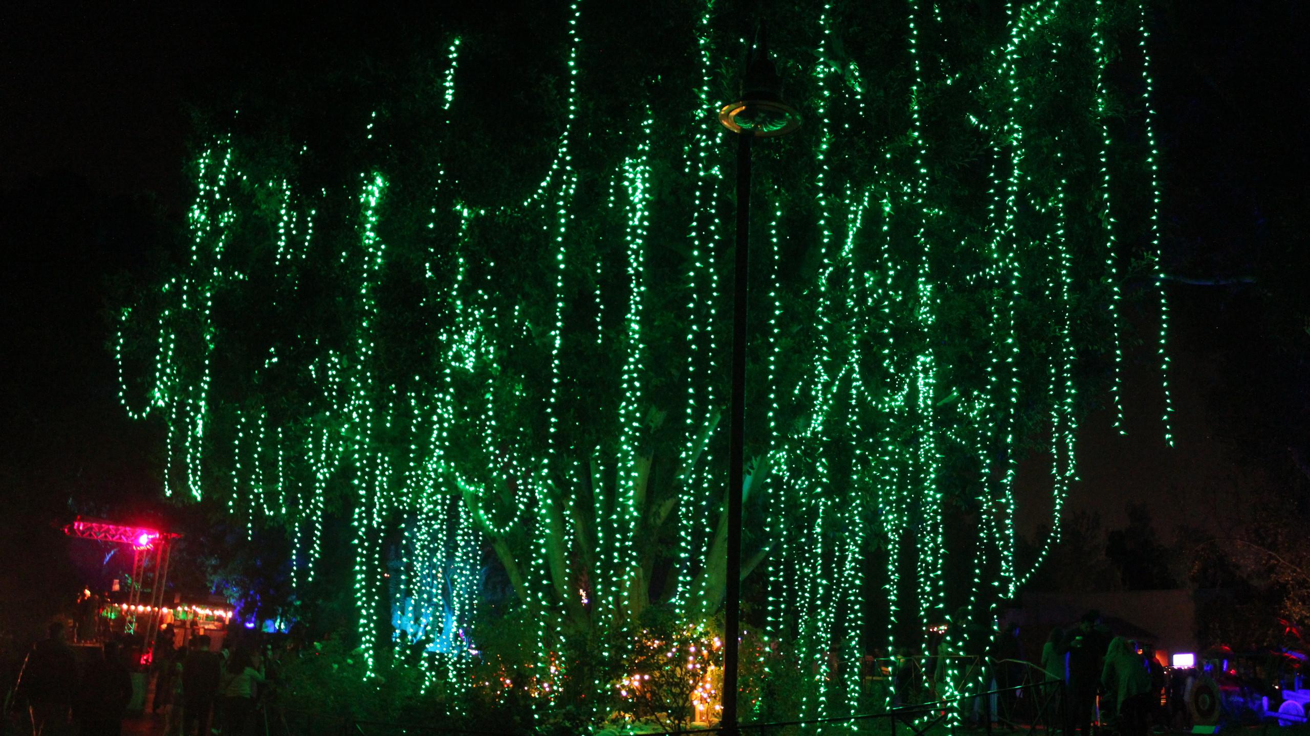 LA Zoo Liights