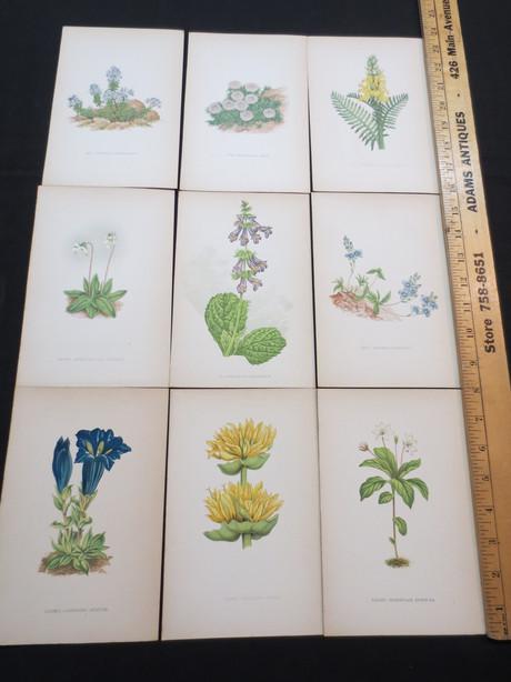 HCBP050 Botanical Print Series
