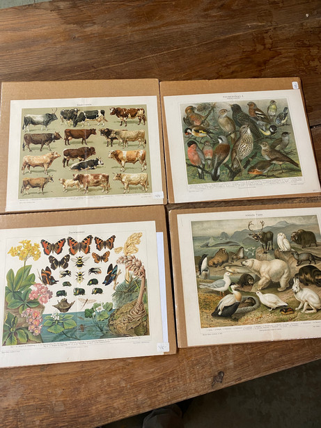CAP550 German Flora & Fauna Prints