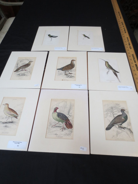 Antique French hand colored bird engravings from Jardine's Nationalist Library of birds circa 1840