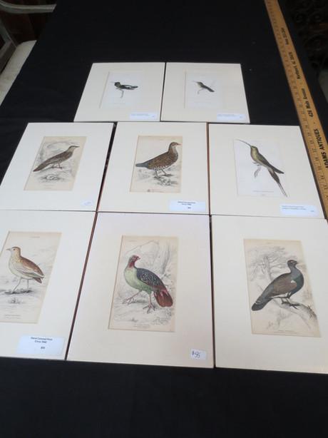 ABP419 Bird Print Series