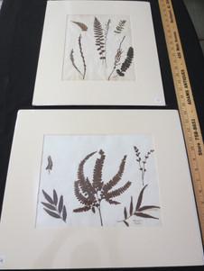 Vintage French Botanical Specimen Herbarium Page Pressed Ferns and Plants