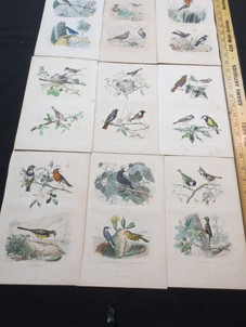 Antique French hand colored bird engraving prints circa late 19th century