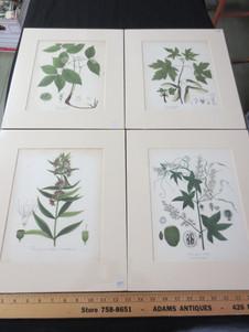Antique English hand colored botanical prints circa 1870