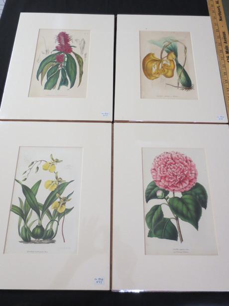 HCF411 Flower Print Series