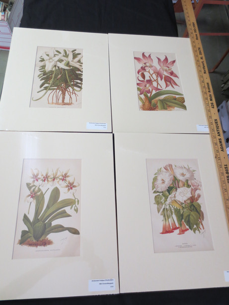HCBP58 Botanical Print Series