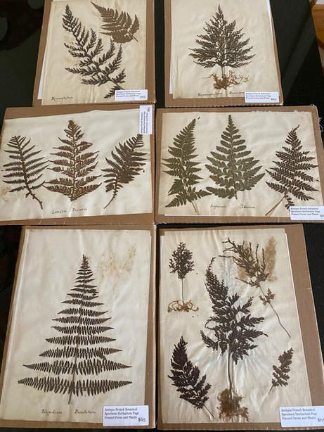 AHS069 Herbarium Series