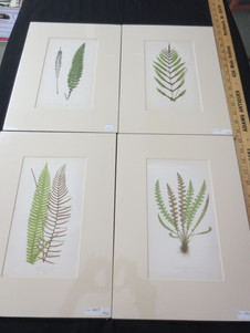 Antique hand colored fern chromolithographs from Edward J. Lowe Ferns: British and Exotic circa 1865