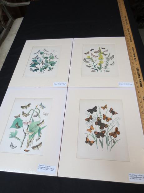 Antique British European Butterflies & Moths by W.F. Kirby hand colored lithograph prints circa 1880