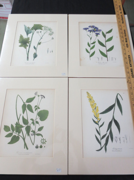 Antique English hand colored botanical prints circa 1860