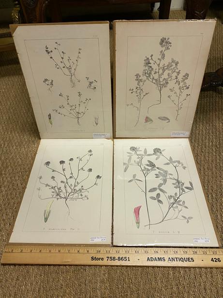 BPS38 Botanical Print Series