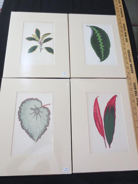 Antique French Hand colored leaf prints from Les plantes a feuillage coloré circa 1867