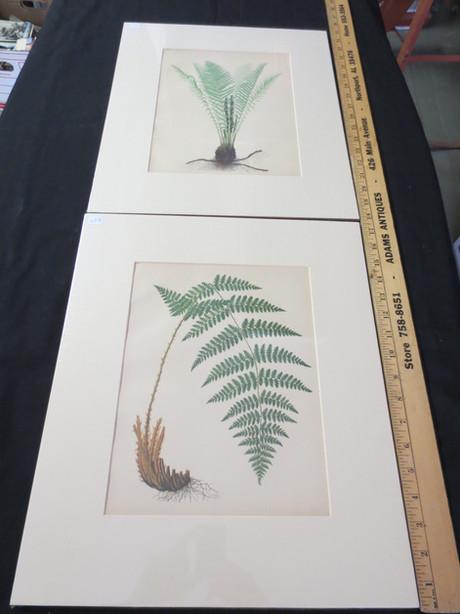 HCB66 Fern Print Series