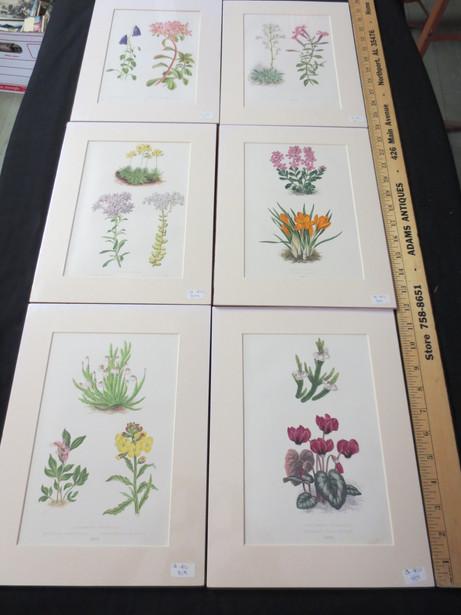 AFP649 Flower Print Series