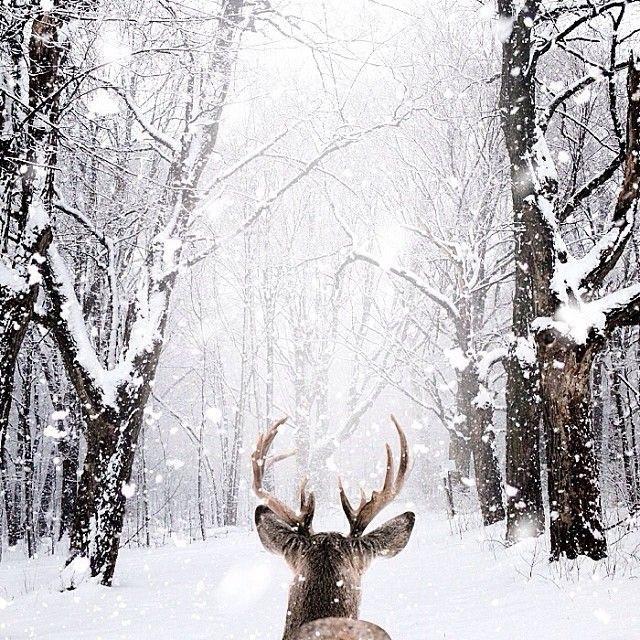 Julebord på Spiregården
