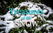 Treasures in the Snow.jpg