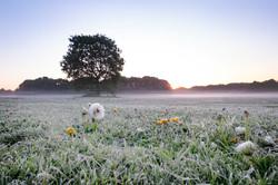 Dawn on Turn Moss