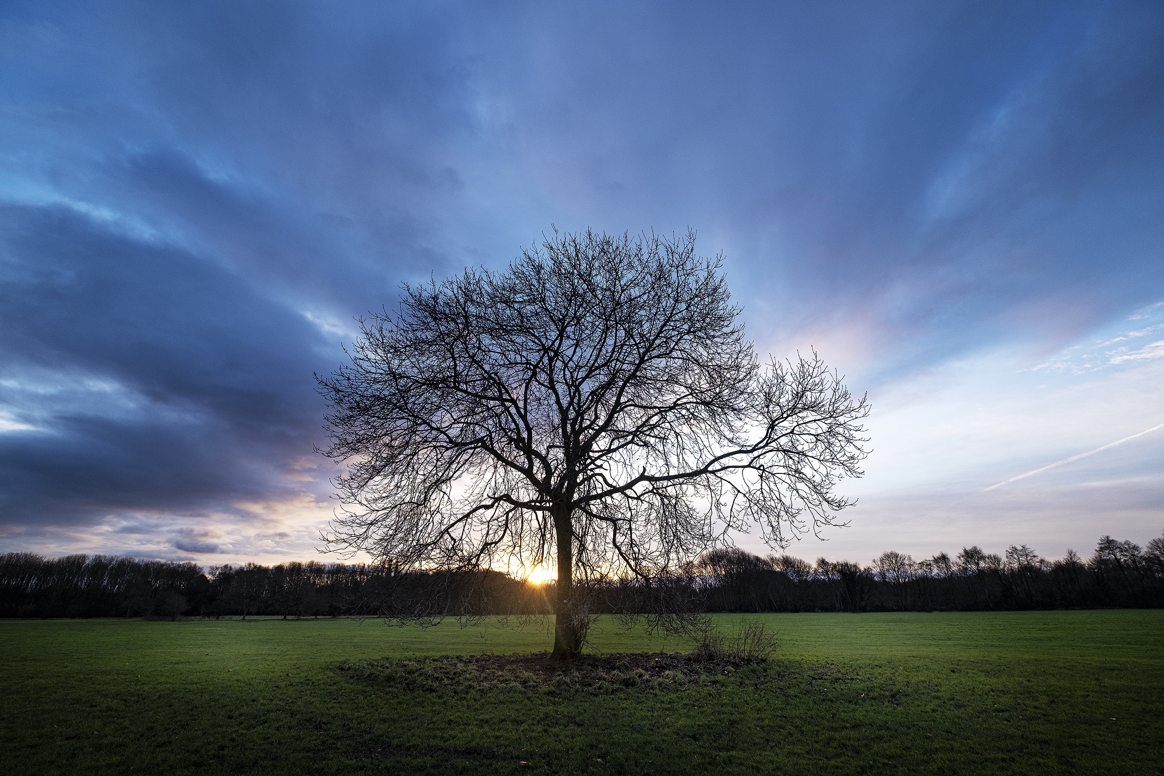 Lone Tree At Dawn