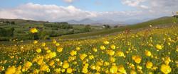 Cumbrian Meadow