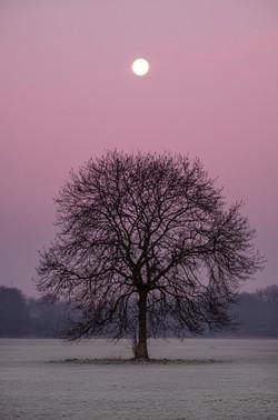 Moon over Tree