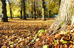Autumnal Ground Cover