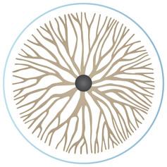 לוגו עבור קרן אבירם מטפלת בנוירופיה