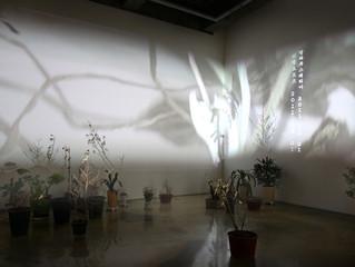 현실에 존재하는 실재와 가상의 순환 / 이은주(아트스페이스 갤러리 정미소 디렉터)