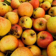 scottish cider apples