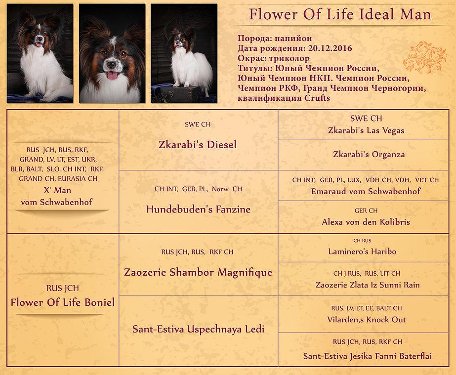 Flower-Of-Life-Ideal-Man-web.jpg