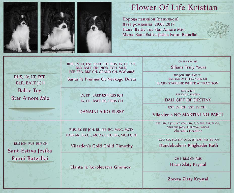 Родословная-Flower-Of-Life-Kristian-web.