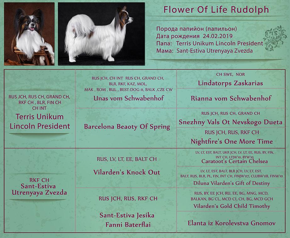 Родословная-Flower-Of-Life-Rudolph-01.jp