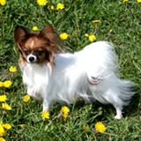 Hundebuden's Ringleader Ruth