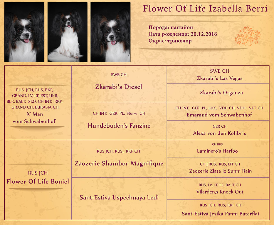Flower-Of-Life-Izabella-Berri-web.jpg