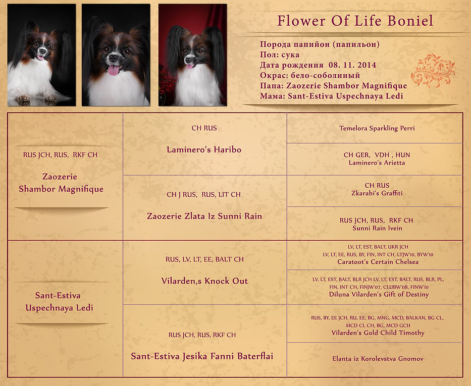 Flower-Of-Life-Bonie-webl.jpg