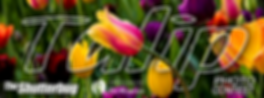2019-TULIP-CONTEST-IMG.png