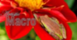 SB-ARTISTIC-MACRO.png