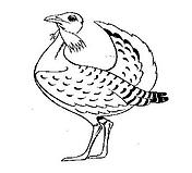Famous Bustard Logo.png