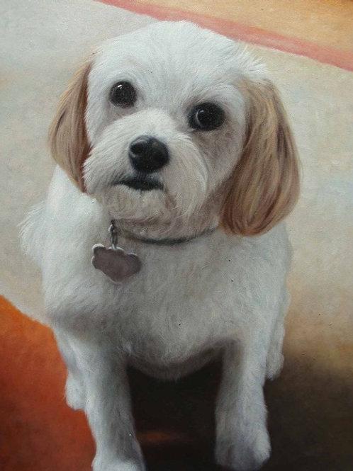 Pets Portrait Drawing/Painting Services