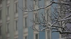 Amorce_branche_et_bâtiment_neige