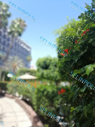 Photography_SELINPOLI(c)243 - Kopie.jpg