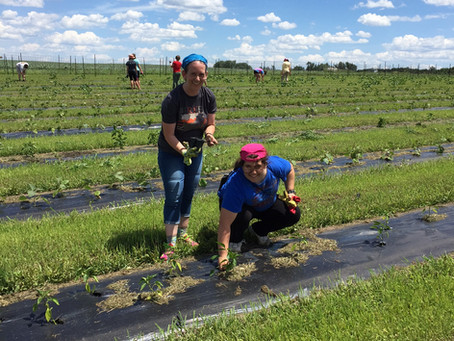 Thinning Carrots, Doing Good