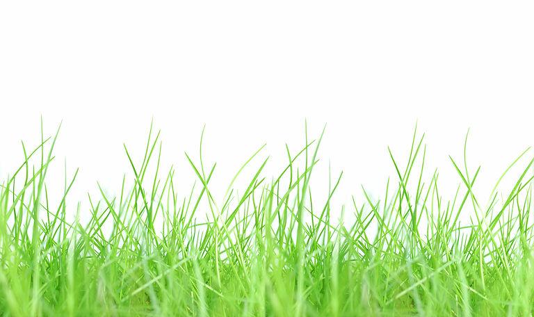 Green-grass-778086.jpg