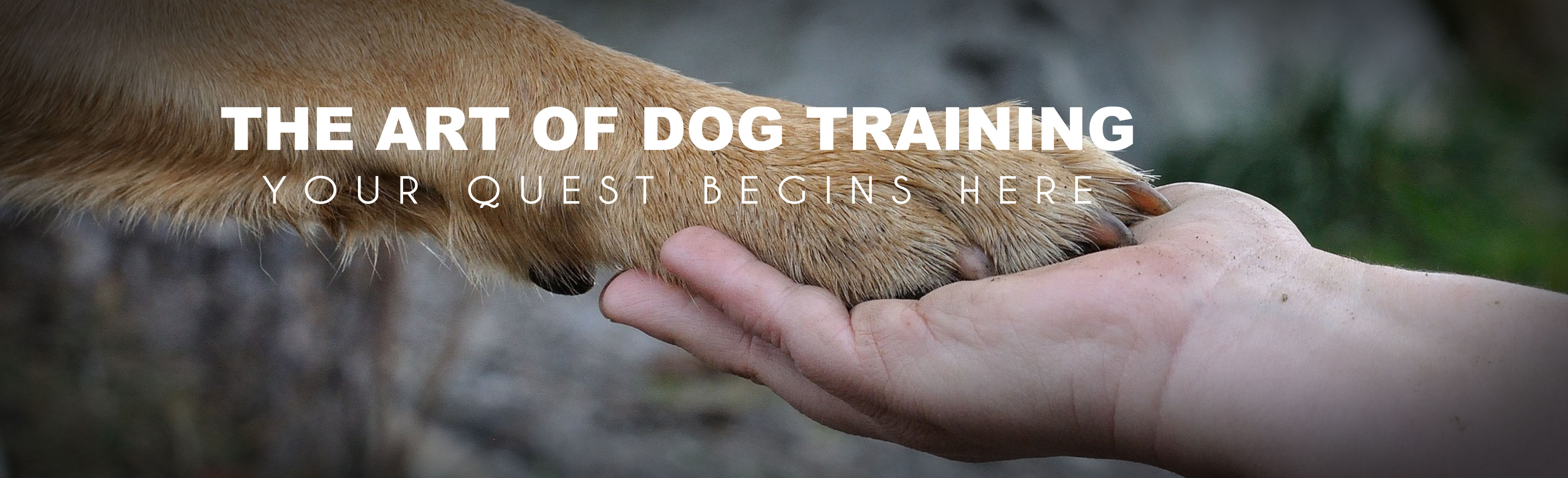 Certified Dog Trainer School