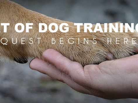 One Stop Shop for Dog Training Services